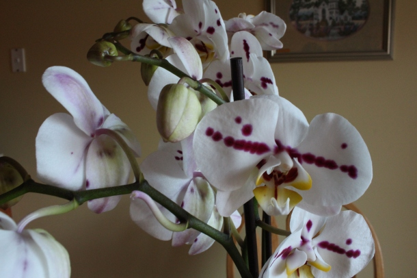 The beautiful Orchid that was sitting on my seat of the car when my husband picked me up after work today.