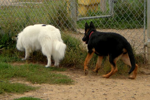 Hey, You....new kid, stop walking away from me, I want to sniff you.